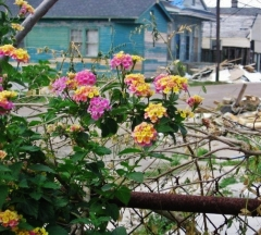 Photo I took in New Orleans, 2007. Beauty in brokenness.
