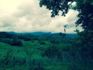 Foothills of El Yunque, MO 2014