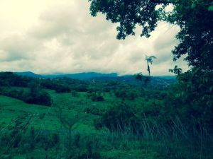 Foothills of El Yunque, MO 2014